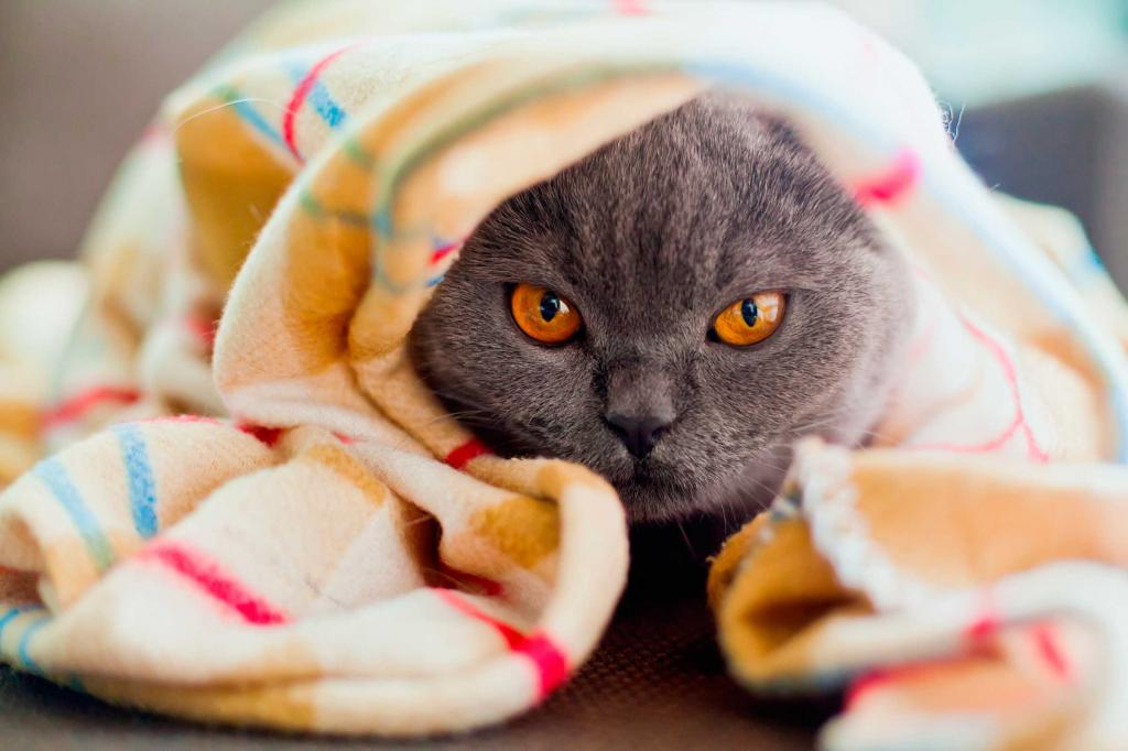 котик приболел картинки туника будет прикрывать