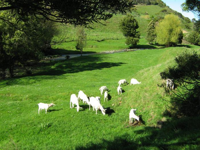 Породы коз молочных