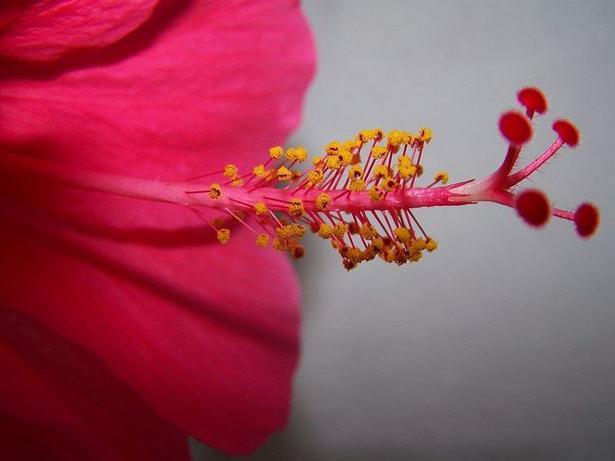 Функции цветка