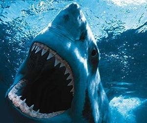 Сколько зубов у акулы подсчету не