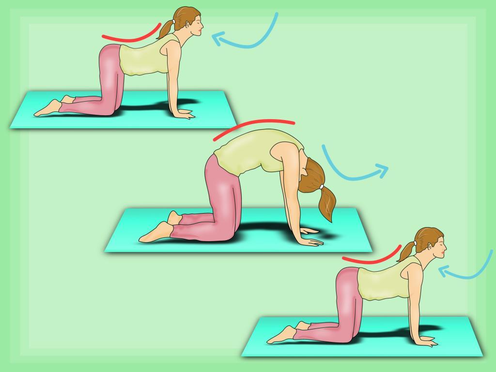 Упражнения кошечка в картинках позвоночника