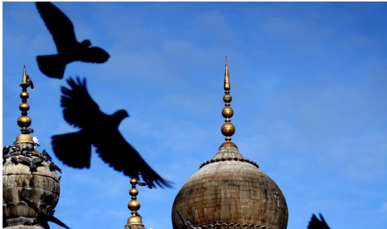 pigeons mosque