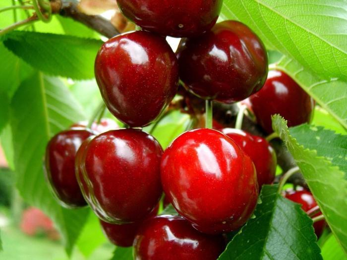 вишневый ликер домашний