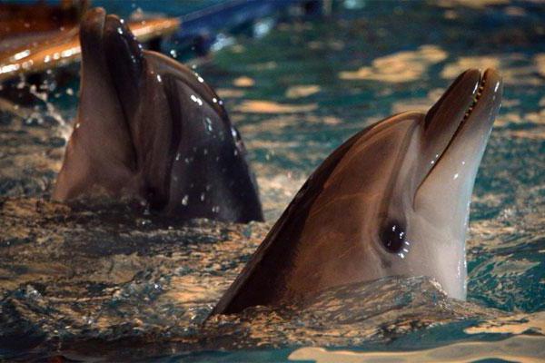 знакомство с дельфинами в москве