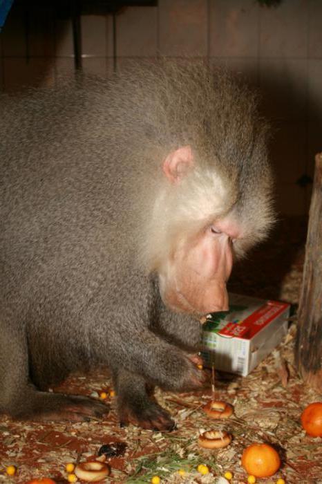 харьковский зоопарк время работы