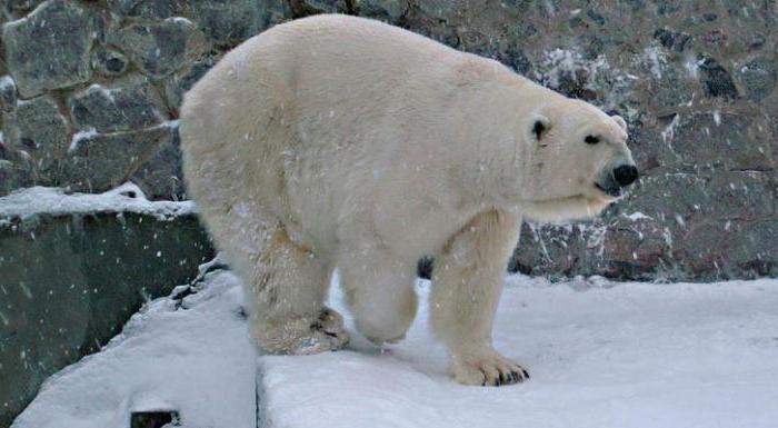 харьковский зоопарк фото животных