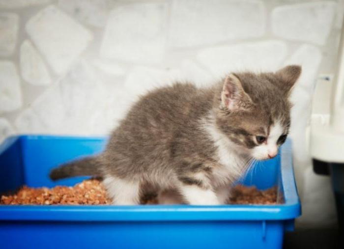 понос у котенка лечение в домашних условиях