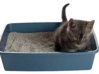 Что дать котенку от поноса