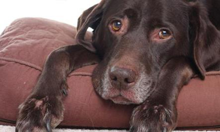 лечение рака у собак