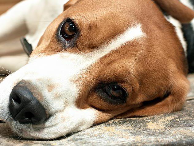 рак печени у собак