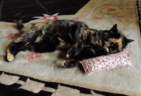 Сколько капель валерьянки можно коту