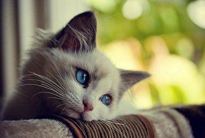 лечебный корм при гастрите у кошек