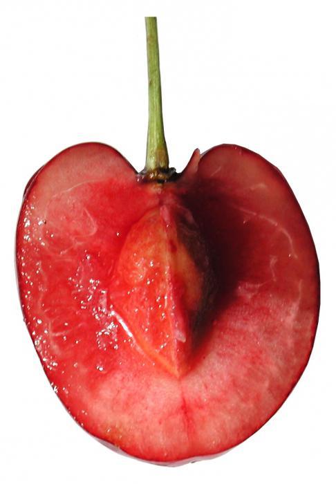 Вишня это ягода или