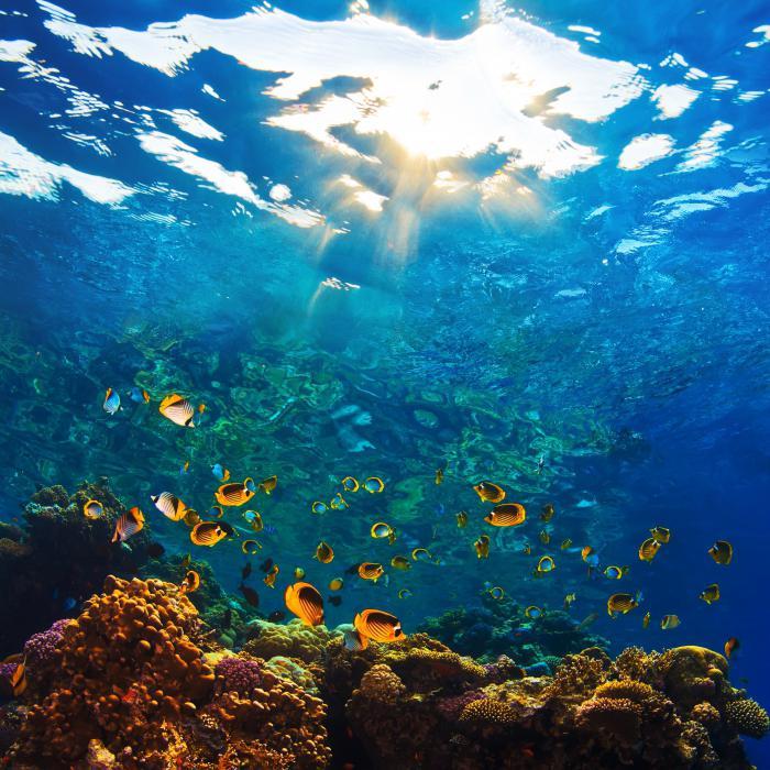 океан фотографии под водой результате