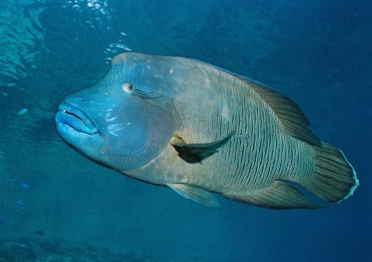 В океанах таится огромное количество