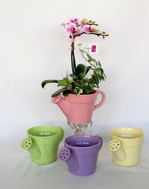 Как поливать орхидеи в домашних условиях: просто о сложном