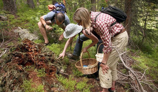 как искать грибы в лесу