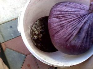 как выдавить сок из винограда