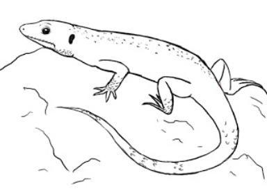 как нарисовать ящерицу поэтапно