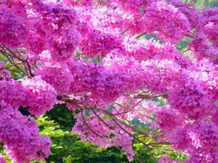 Самый красивый цветок в мире какой он