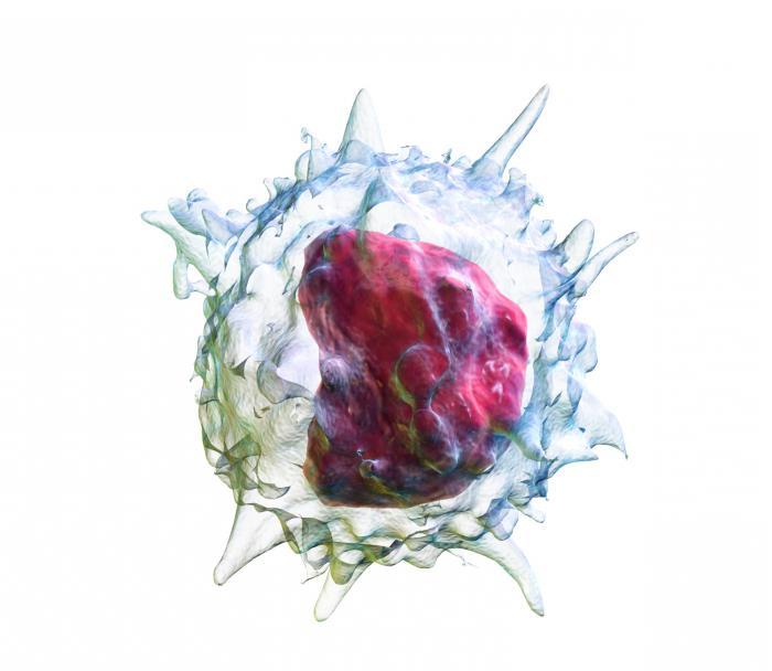 Моноциты повышены у ребенка в крови