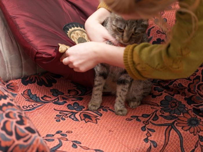 смерть от глистов у кошек