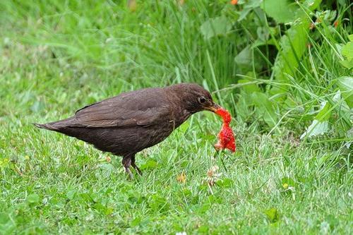 как защитить клубнику от птиц