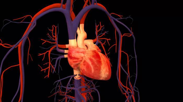 Human anatomy animation
