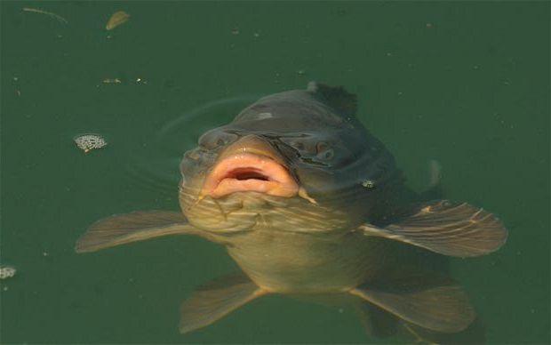 какая рыба хорошо клюет в сентябре