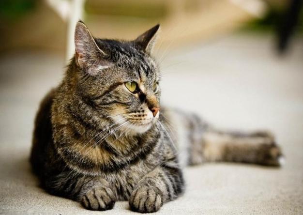 Выбираем имена для кошки девочки - Все о кошках