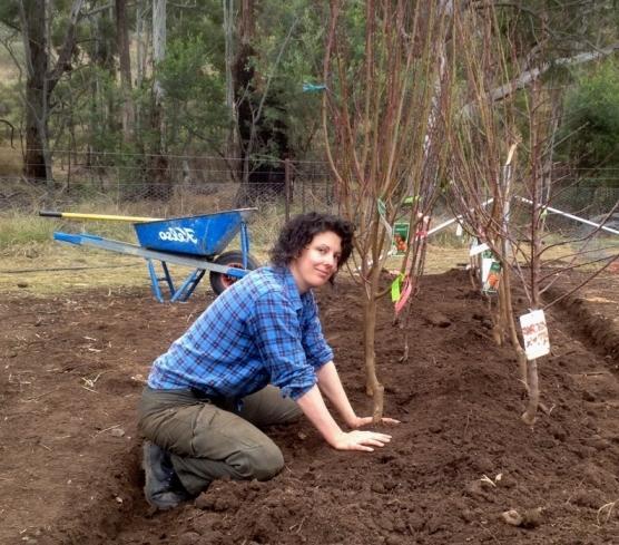 Когда садить деревья 2018