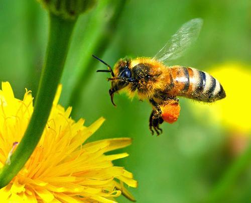 Все о продукции пчеловодства