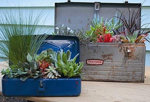 интересная идея для сада - пустыня в чемодане