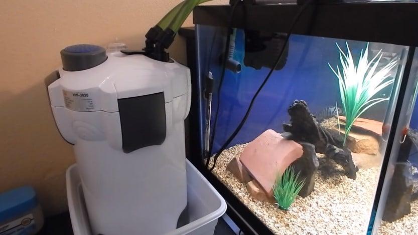 Установка фильтра в аквариум: правила и рекомендации. Как расположить фильтр в аквариуме