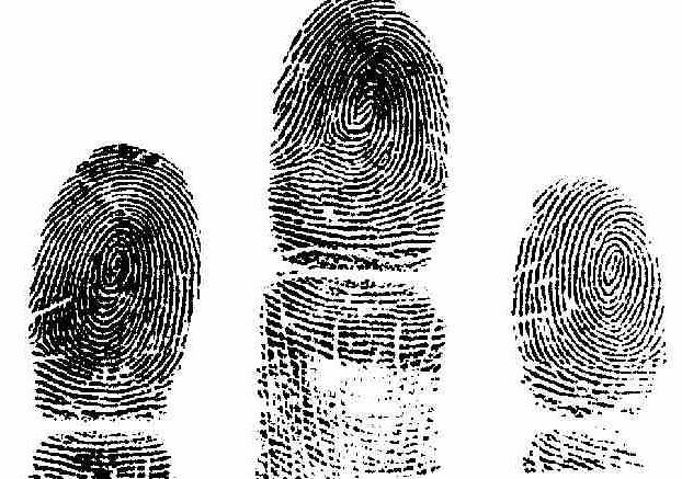 виды криминалистической идентификации