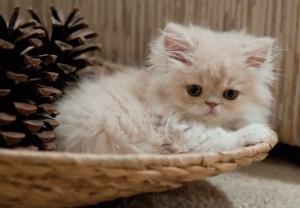 Чем кормить месячного котенка в домашних условиях