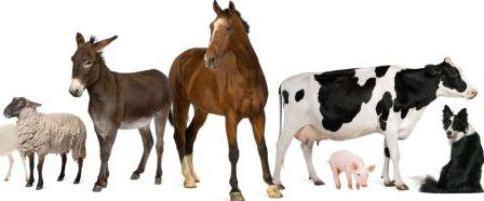 Элеовит инструкция по применению в ветеринарии отзывы