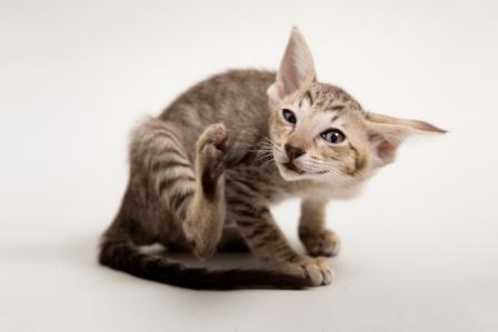 стоп зуд для кошек отзывы