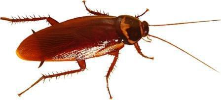 Мелок Машенька; от тараканов: принцип действия, состав и отзывы