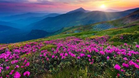 Цветы фото в горах