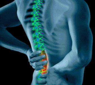 мышцы выпрямляющие позвоночник относятся к мышцам