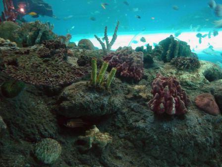 океанариум таиланд паттайя