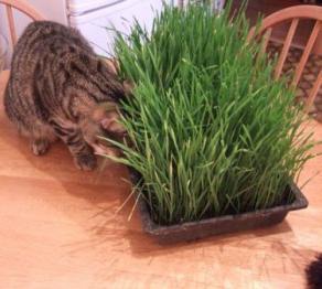 витамины для кошек от выпадения шерсти отзывы