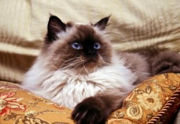витамины для кошек от выпадения шерсти в каплях