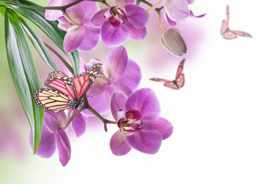 Орхидея пелорик: фото, разновидности и уход в домашних условиях