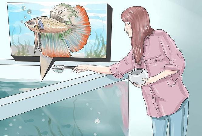 С какими рыбами уживаются петушки