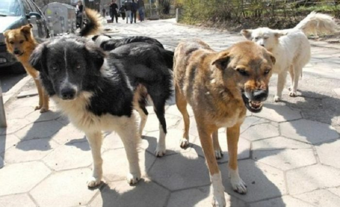 Свора бродячих собак