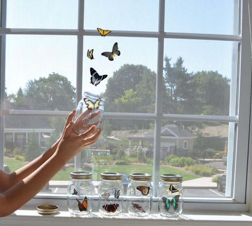 Как ухаживать за бабочкой: особенности содержания и кормления необычного питомца