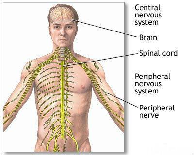 типы нервной системы