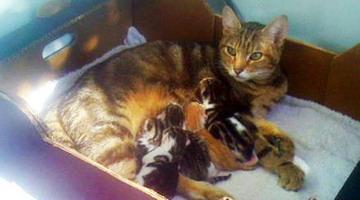 Как принимать роды у кошки и что для